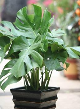 今夏最流行的5种不同风格绿植搭配