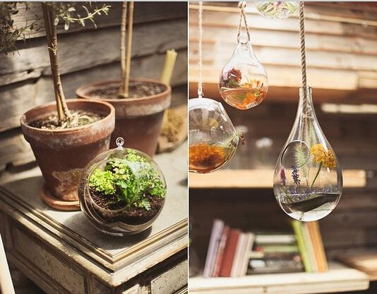小户型家里也能变成植物园!