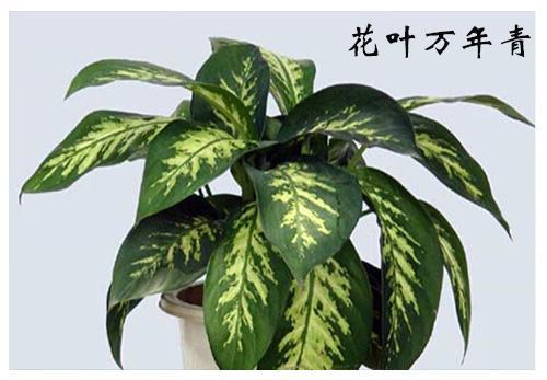 谨记:这些植物虽然美,但绝对不能放室内!