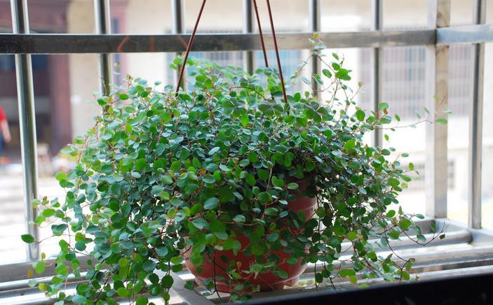 家居植物摆放宜忌 不同空间应摆放什么植物