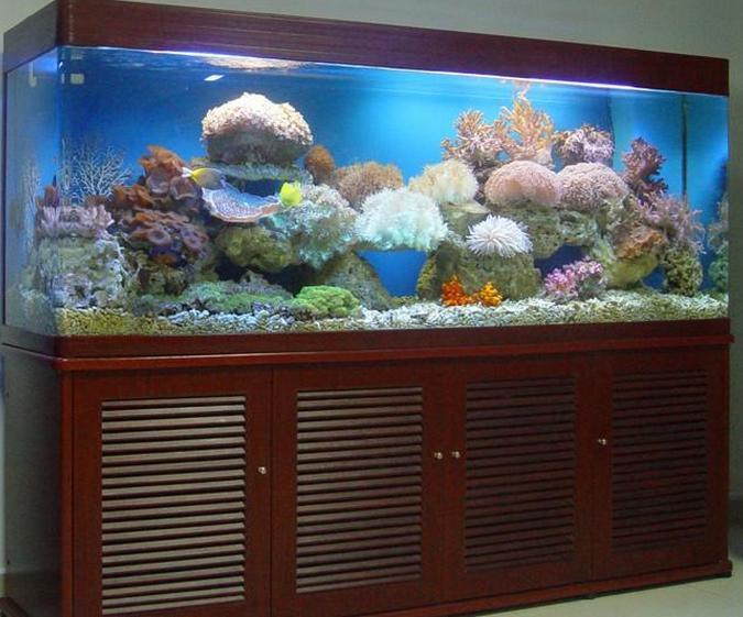 家里或公司风水鱼缸该怎么摆放比较好