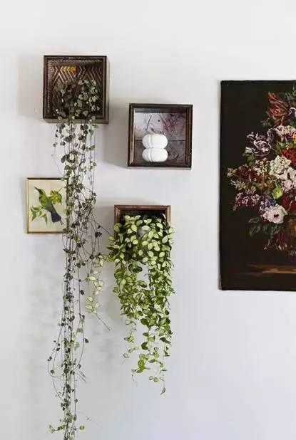 如何在自己的「小窝」小户型家里种花养草