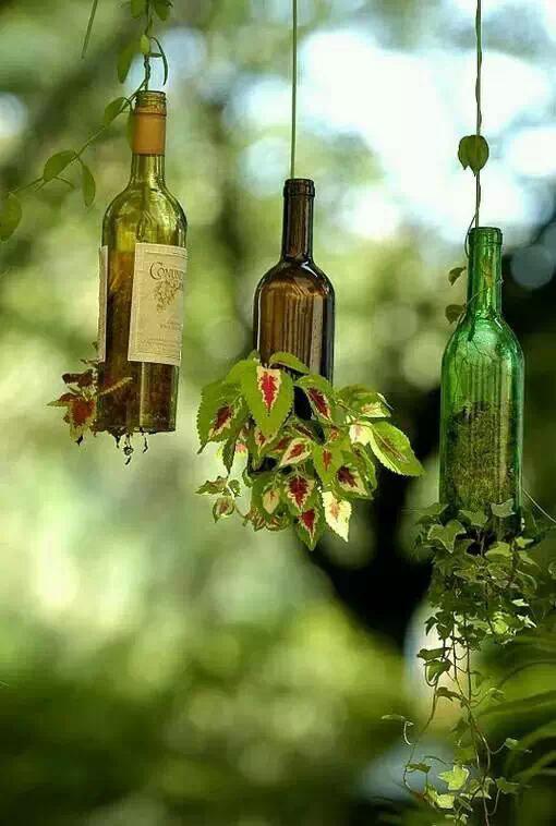 家里就这样种植物吧,好看又健康!