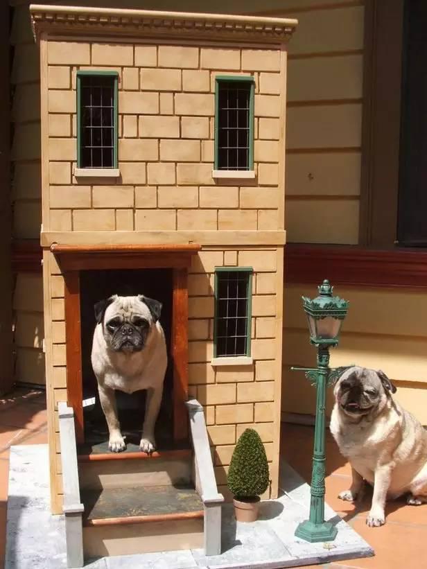 人们梦寐以求的房子,都让狗狗住进去了!