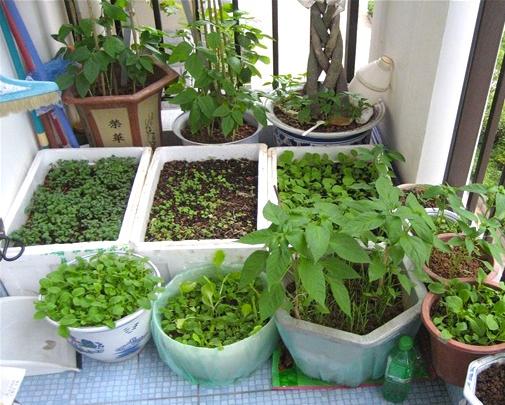 打造最实用菜园阳台