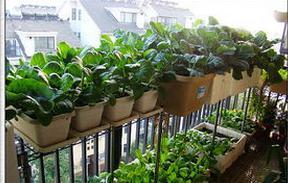 阳台菜园建设需要注意什么