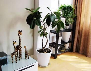 家具花儿的摆放需要注意的地方