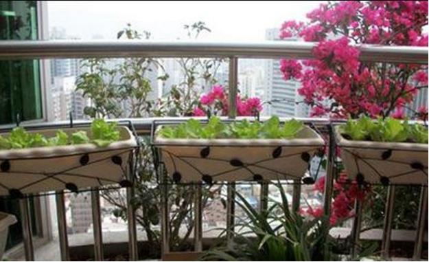 阳台蔬菜种植