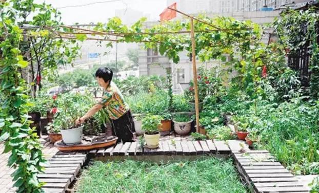 阳台上的花果木架