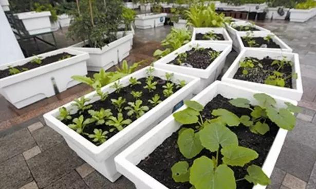 种菜用塑料盆