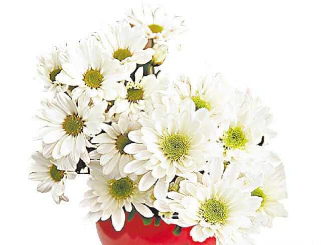 进门玄关非常重要,你会放什么花呢?