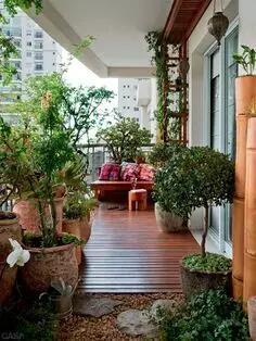 阳台花卉种养与布置