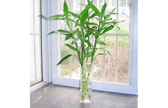 客厅风水植物--维意定制家具网上商城